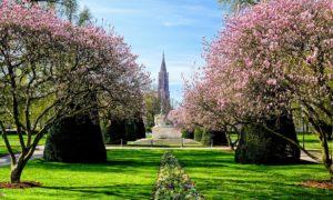 Les magnolias de la place de la République
