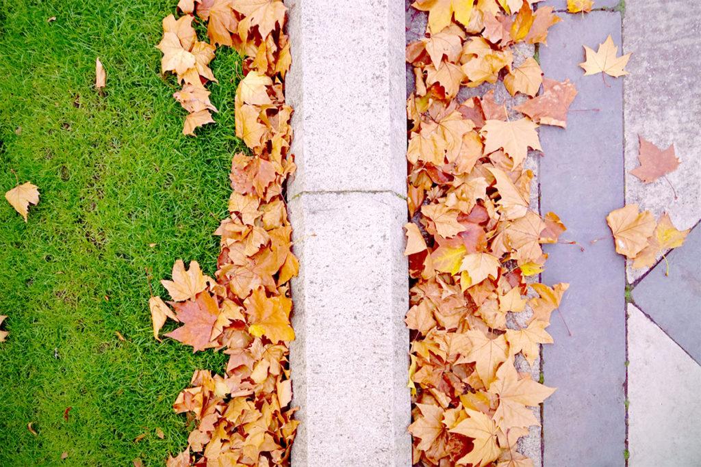Pelouse et feuilles d'automne à Kensington Gardens