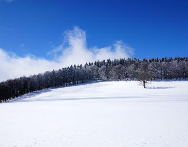 Promenade dans la neige et repas insolite au Hohwald