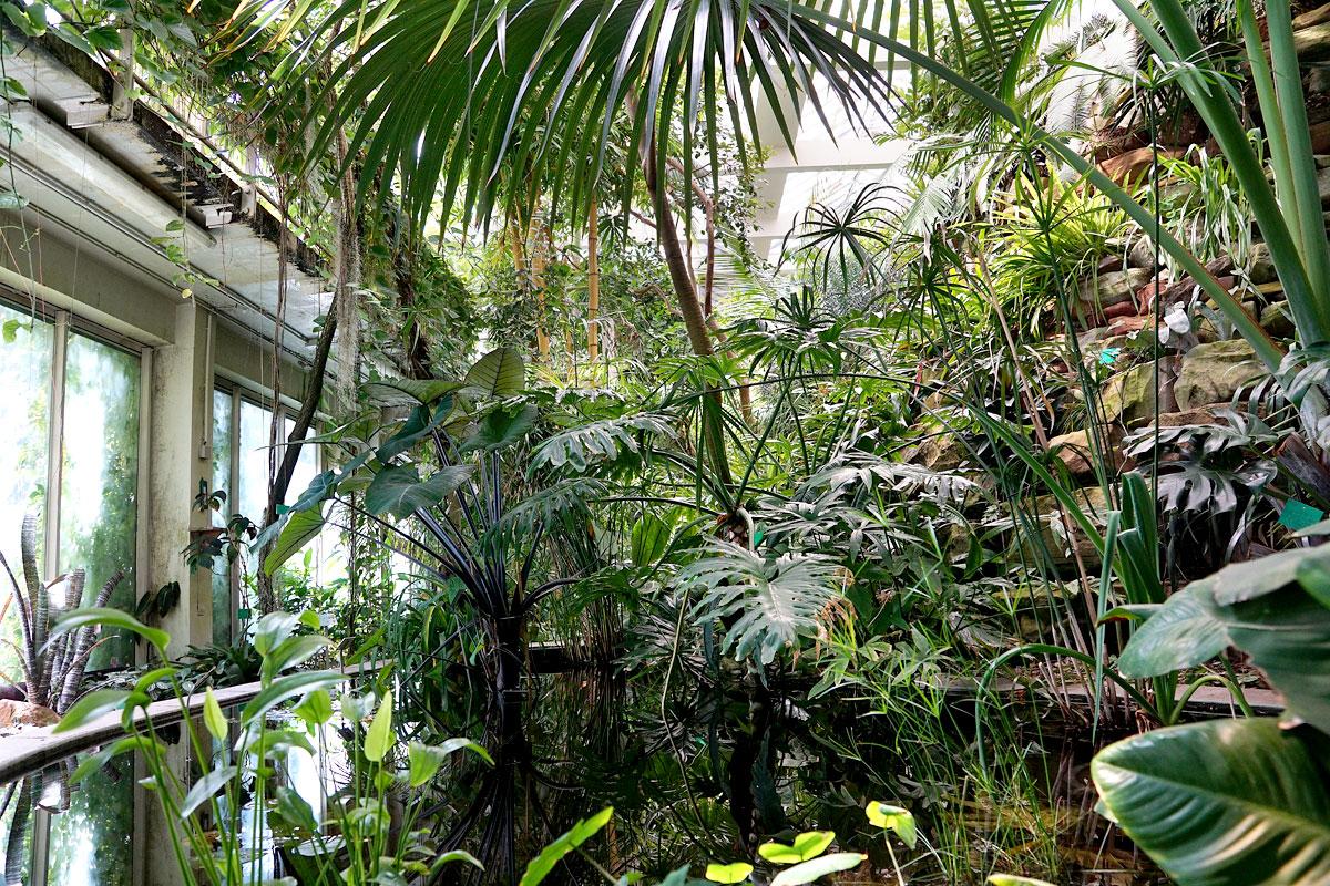 Le jardin botanique de Strasbourg - Cotad