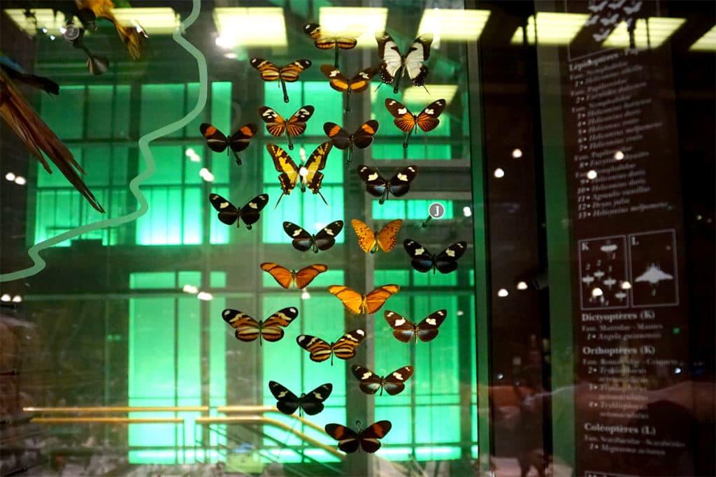 Papillons de la Grande Galerie de l'Evolution