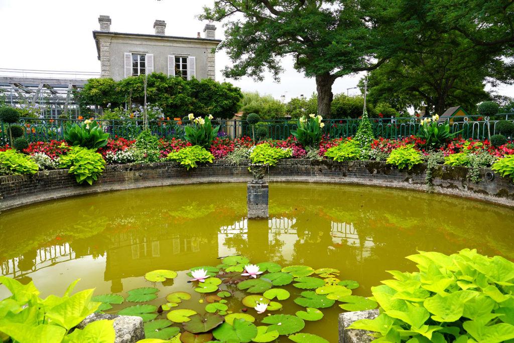 Le bassin et les carpes du jardin botanique de Bayeux