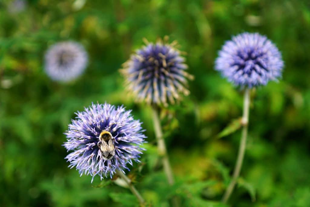 Fleurs du jardin botanique de Bayeux