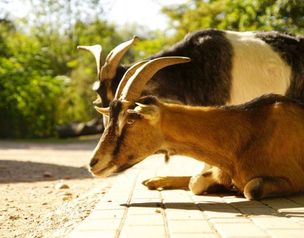 Aller voir les animaux du Parc Friedel