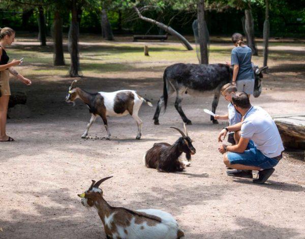 Parc Friedel : promenade au milieu des animaux en liberté