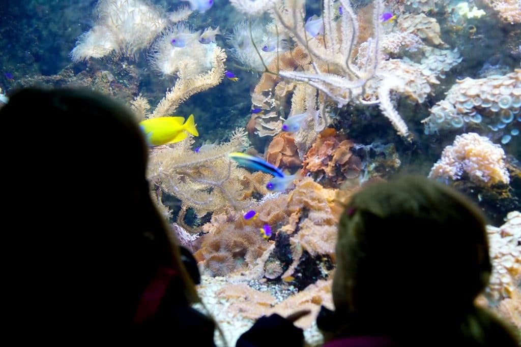 Aquarium Mundenhof