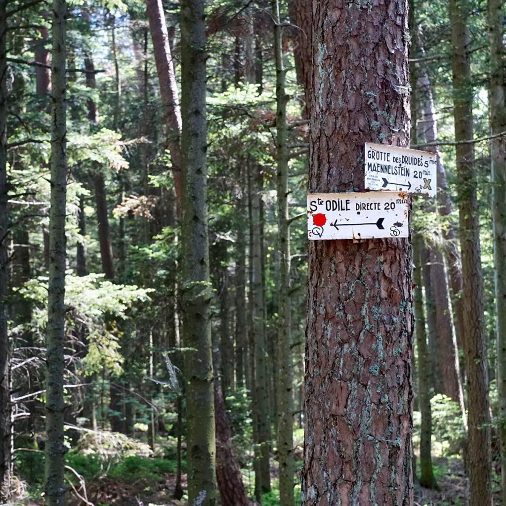 Circuits de randonnée au Mont Sainte-Odile