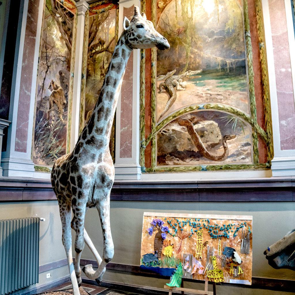 Girafe au musée zoologique de Strasbourg