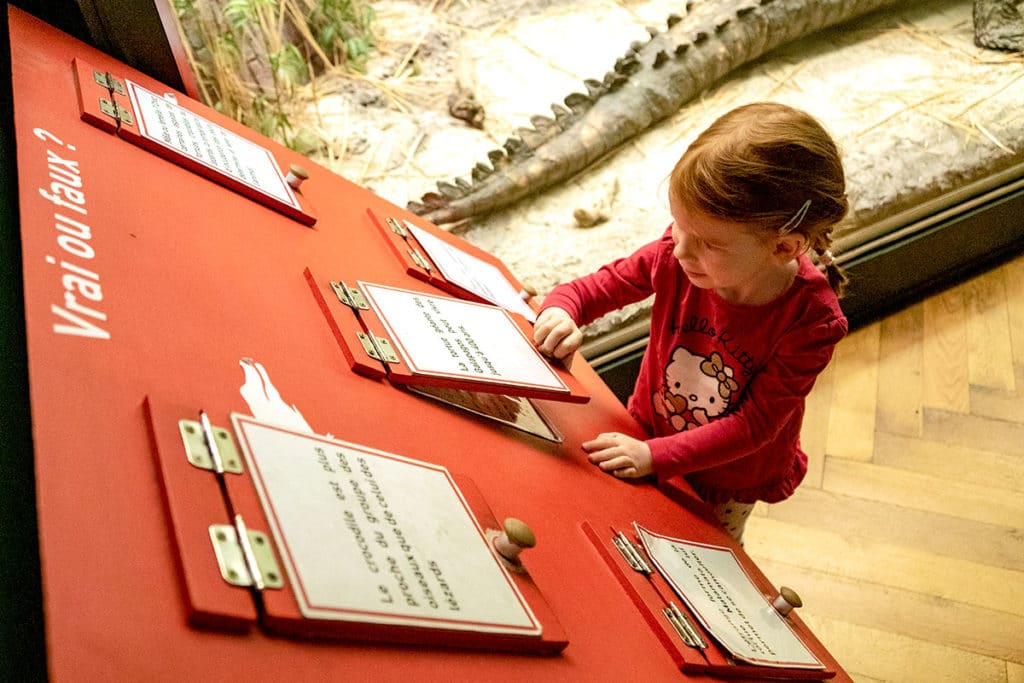Quiz au musée zoologique de Strasbourg