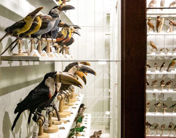 Visite du musée zoologique de Strasbourg
