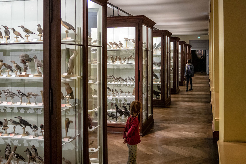 Collection d'oiseaux au musée zoologique de Strasbourg