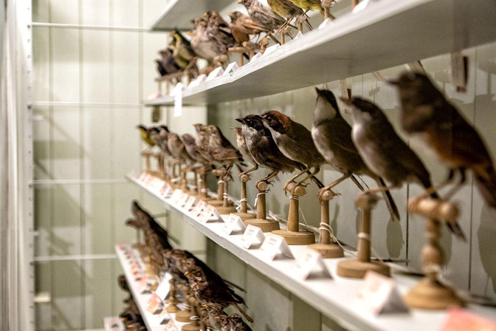 Oiseaux au musée zoologique de Strasbourg