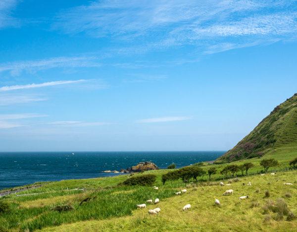 1 semaine en famille en Irlande du Nord