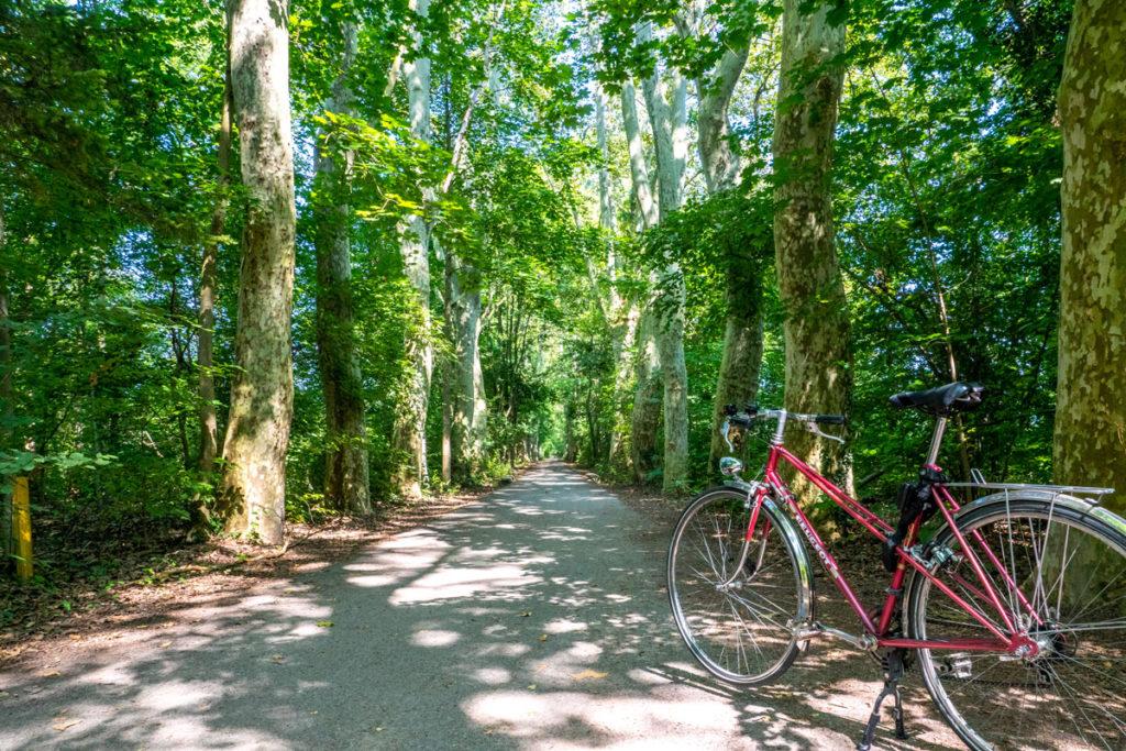 Forêt de la Robertsau à vélo sur la piste des forts