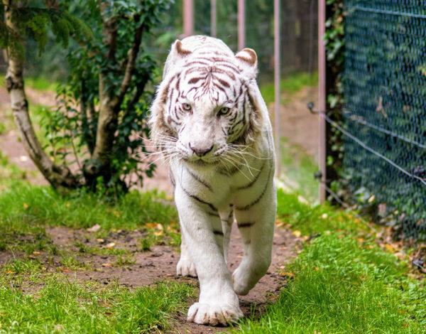 Visite du zoo d'Amnéville
