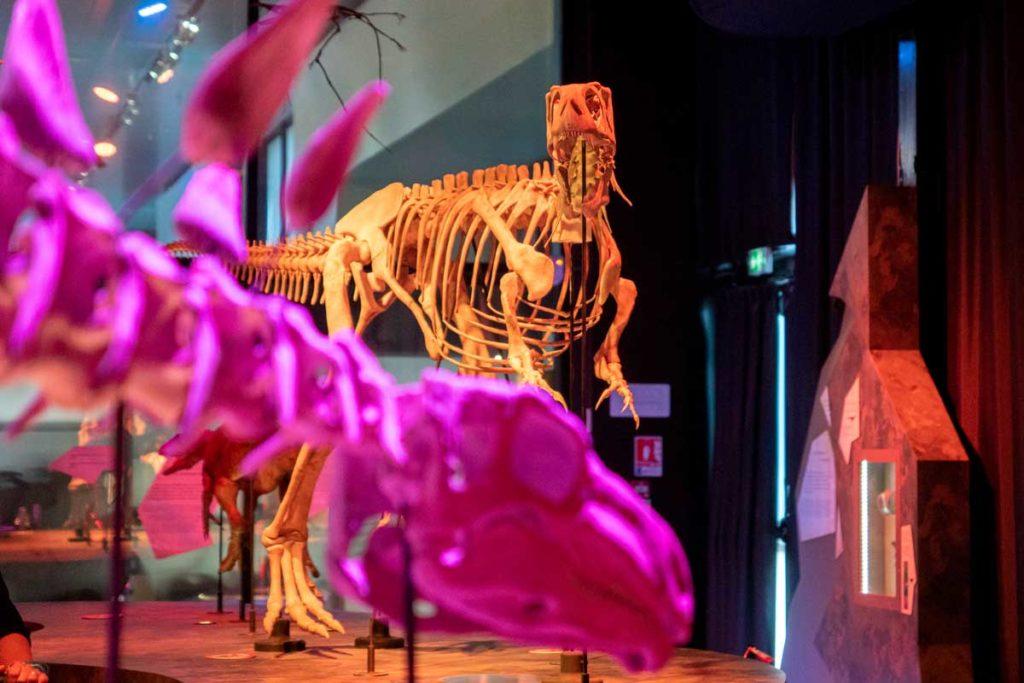 Dinosaure de Normandie au Paléospace