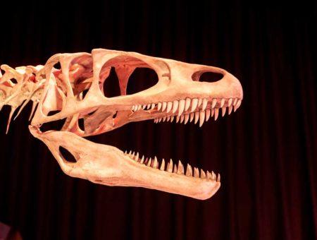 Paléospace, à la découverte des dinosaures de Normandie
