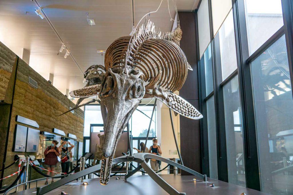 Squelette d'Ichtyosaure au Paleospace