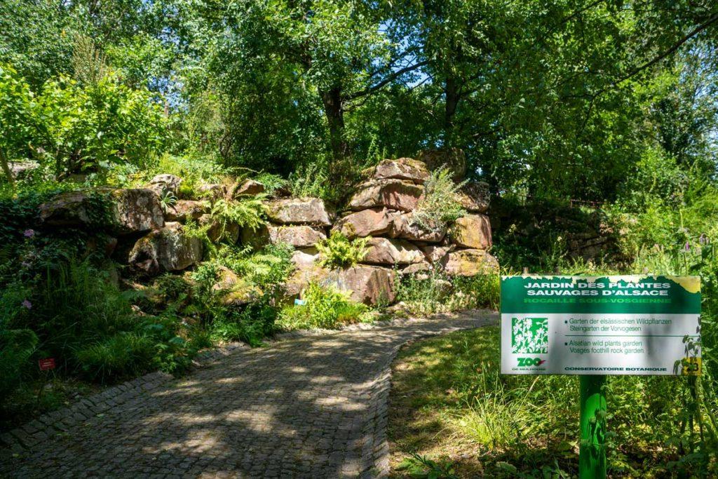 Jardin des plantes sauvages d'Alsace
