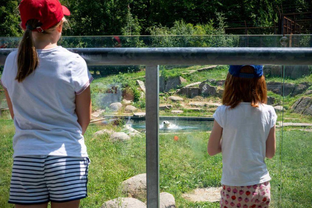 Observation de l'ours polaire au zoo de Mulhouse