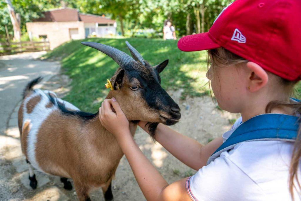 Au contact des chèvres dans le Zoo des Enfants à Mulhouse
